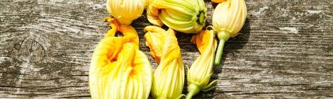 zucchini-fower
