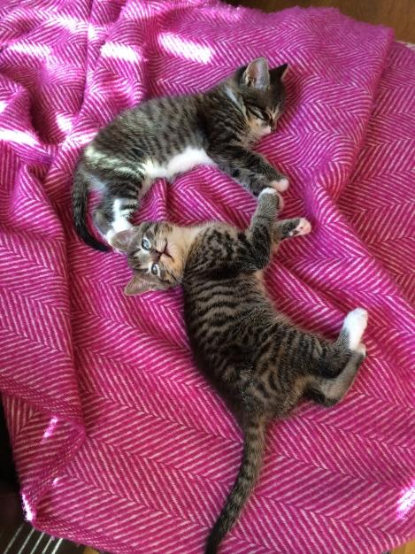 mangia-bene-blog-kittens