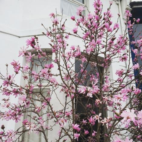 spring-blossom